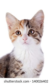 Portrait of a multi-colored kitten. Multi-colored small kitten. Kitten on a white background. Small predator. Small cat.