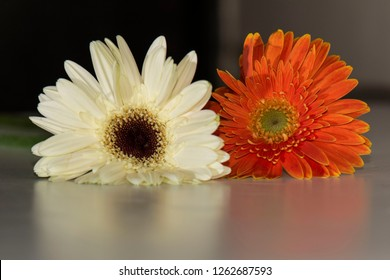 Bunga Aster Images Stock Photos Vectors Shutterstock