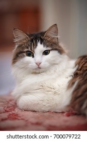 Portrait of the nice cat lying on a pink rug.