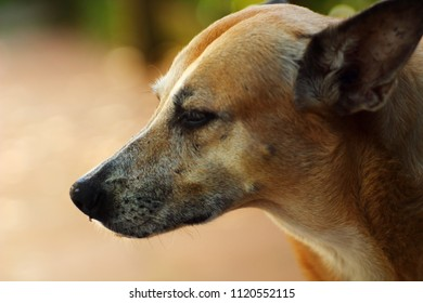 Portrait of a non-breeding dog on the street
