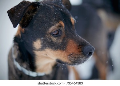 Portrait of not purebred dog in the winter.