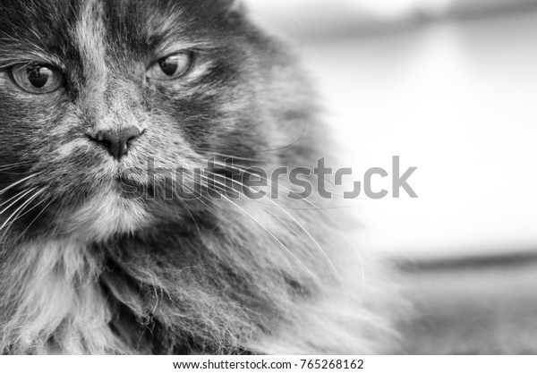 Portrait of an old cat looks so serious