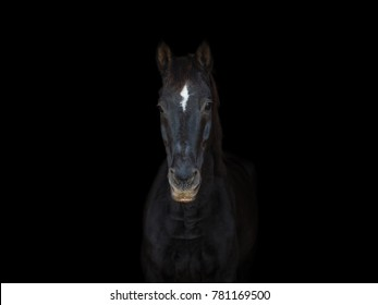 portrait of old dressage horse on black background