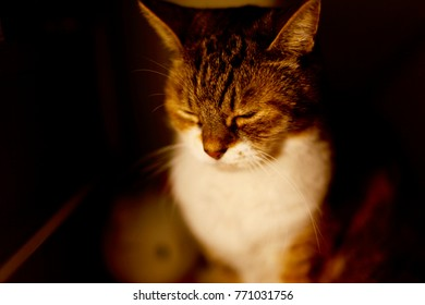 Portrait of an Old Female cat
