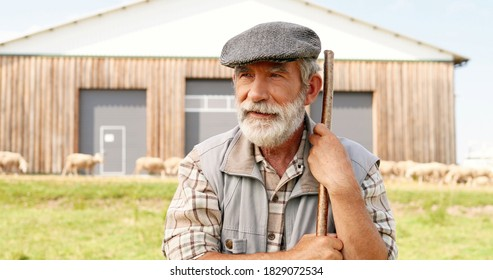 Portrait old handsome Caucasian male shepherd with beard and in cap standing outdoors at pasture, leaning on stick and looking far. Sheep flock grazing on background. Close up of grandfather at farm.