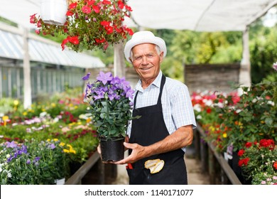 Portrait of older man proud of blooming flowers cultivated in his greenhouse