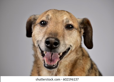 Portrait of on adorable mixed breed dog - studio shot, isolated on grey.