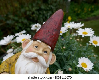 Portrait on a garden gnome with with beard and red hat in front of a green background with daisies