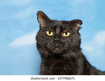 Portrait of one adorable huggable scruffy black cat looking directly at viewer with bright yellow eyes. Blue background sky with clouds.