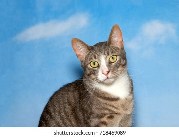Portrait of one brown tan and white tabby kitten looking directly at viewer, head tilted slightly as if curious or confused. Blue background sky with clouds.