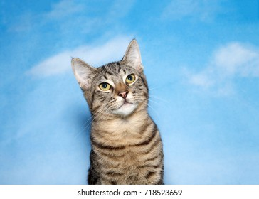Portrait of one brown tan and white tabby kitten looking up to viewers right. Blue background sky with clouds. Copy space.