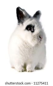 Portrait of one small rabbit
