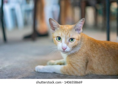 A portrait of an orange tabby cat with its face showing somewhat confident facial expression, making it appears elegant and photogenic.