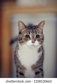 Portrait of an ordinary striped domestic cat.