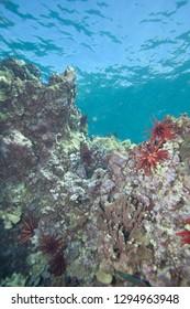 Portrait Orientation of Coral Reef Underwater Landscape