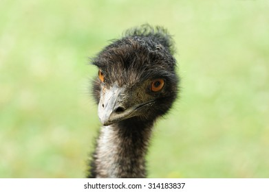 portrait of the ostrich on the blurred background