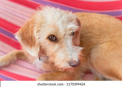 Portrait outdoor little cross breed dog in colorful striped hammock
