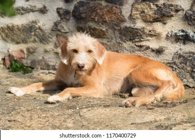 Portrait outdoor little cross breed dog against stone wall