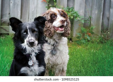 Portrait of a pair of dogs