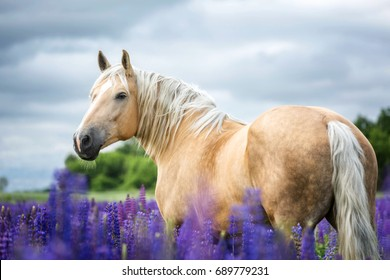 Portrait of a Palomino horse outdoors.