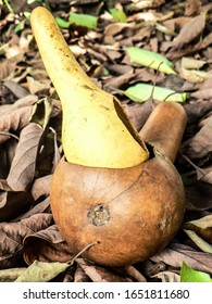 Portrait photo of an African calabash styled glass that is used to drink Traditional beer. it is made of plant fruit and is mostly found in Southern parts of Africa.