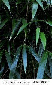 Portrait photograph of bamboo leaves