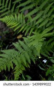 Portrait photograph of fern leaves