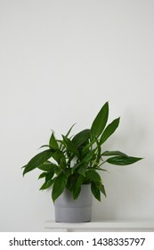 Portrait photograph of peace lily indoor plant against white background