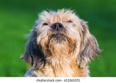 portrait picture of a cute old dog