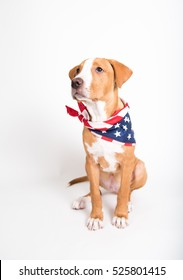 Portrait of Pit Bull Puppy Wearing American Flag Bandana