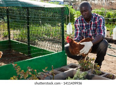 Portrait of positive African American farmer with hen in hands on backyard