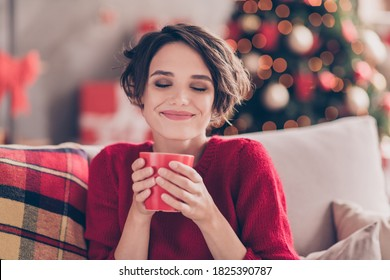 Portrait of positive lady smell aromatic coffee cup sit couch in house indoors with christmas x-mas atmosphere decoration wear jumper - Shutterstock ID 1825390787