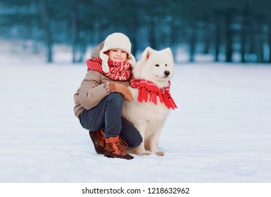 Portrait preteen boy child walking with white Samoyed dog in winter day