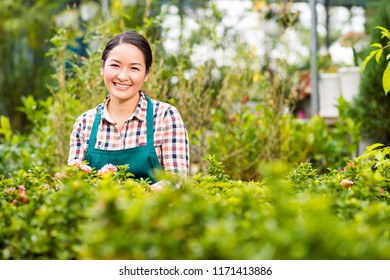 Portrait of pretty Vietnamese woman gardening in her backyard