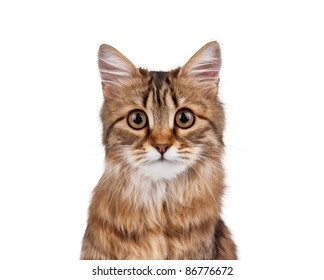 Portrait of pretty young cat over white background
