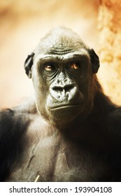 portrait primate - Shutterstock ID 193904108