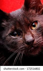 portrait of a puppy cat