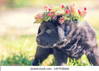 Portrait of a puppy outdoors. The dog  wearing Christmas wreath.