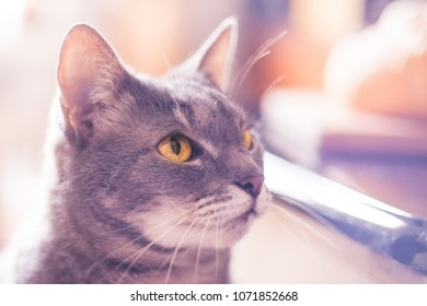 Portrait of purple cat looking at side close up