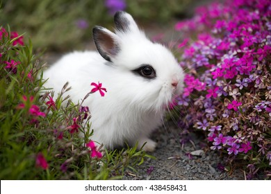 Portrait of a rabbit in the garden