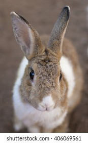 Portrait of rabbit, sweet, lovely and funny