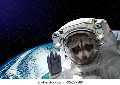 Portrait of a raccoon astronaut in space on background of the globe. Elements of this image furnished by NASA.