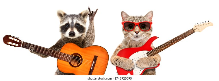 Portrait of raccoon and cat in sunglasses with guitars isolated on white background