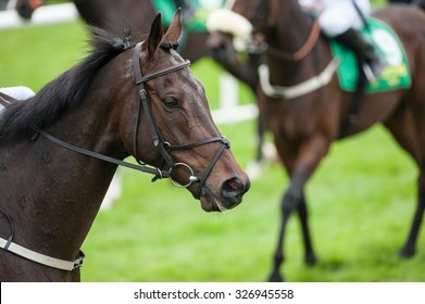 portrait of race horse on the race track