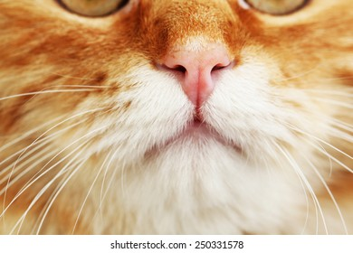 Portrait of red cat, closeup