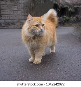 portrait of a red cat on the background of the park. City environment.