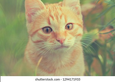 portrait of a red cat in outdoor