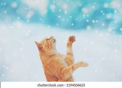 Portrait of a red cat outdoors in snowy winter. The begging cat cathes snowflakes.