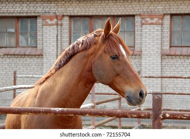 Portrait of red horse in enclosure with brick wall on background