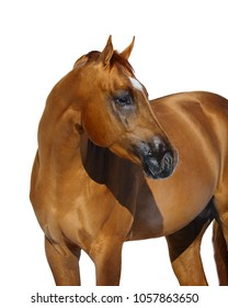 Horse front view images stock photos vectors shutterstock portrait of a red horse look back isolated on white background sciox Choice Image